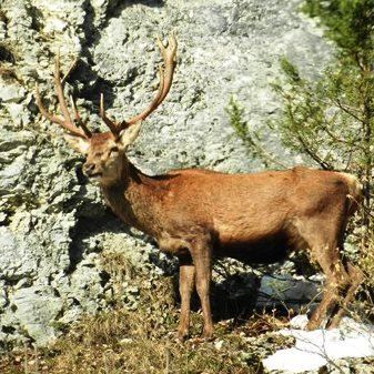 1- Vercors Nature et Observations (vign)